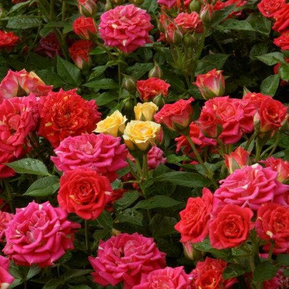 roosid soodushinnaga